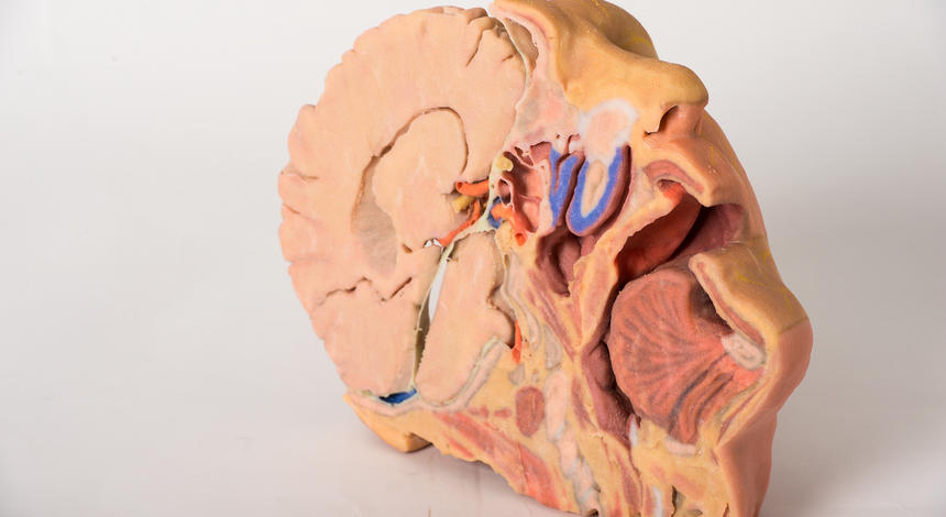 3d Printed Anatomy Kit Ready To Ship Open Biomedical Initiative