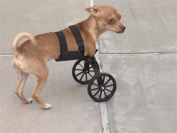 Two Legged Puppy Scooter Mobile With A