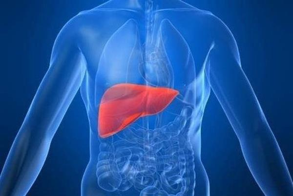 Pandorum Technologies bioprinting liver India